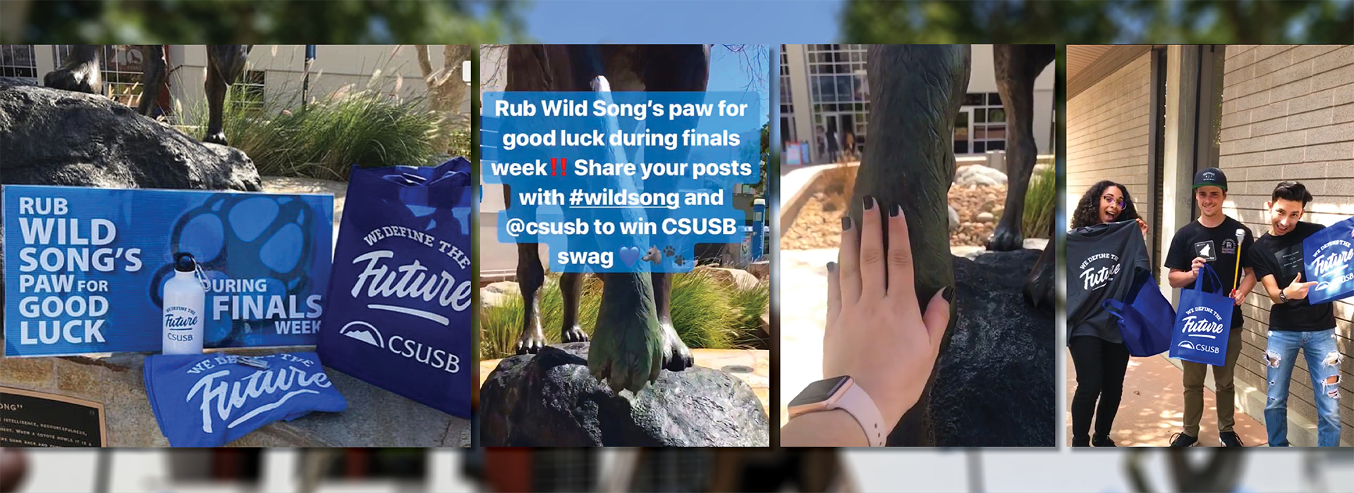 It's a Coyote tradition: Rub Wild Song's paw for good luck during finals week