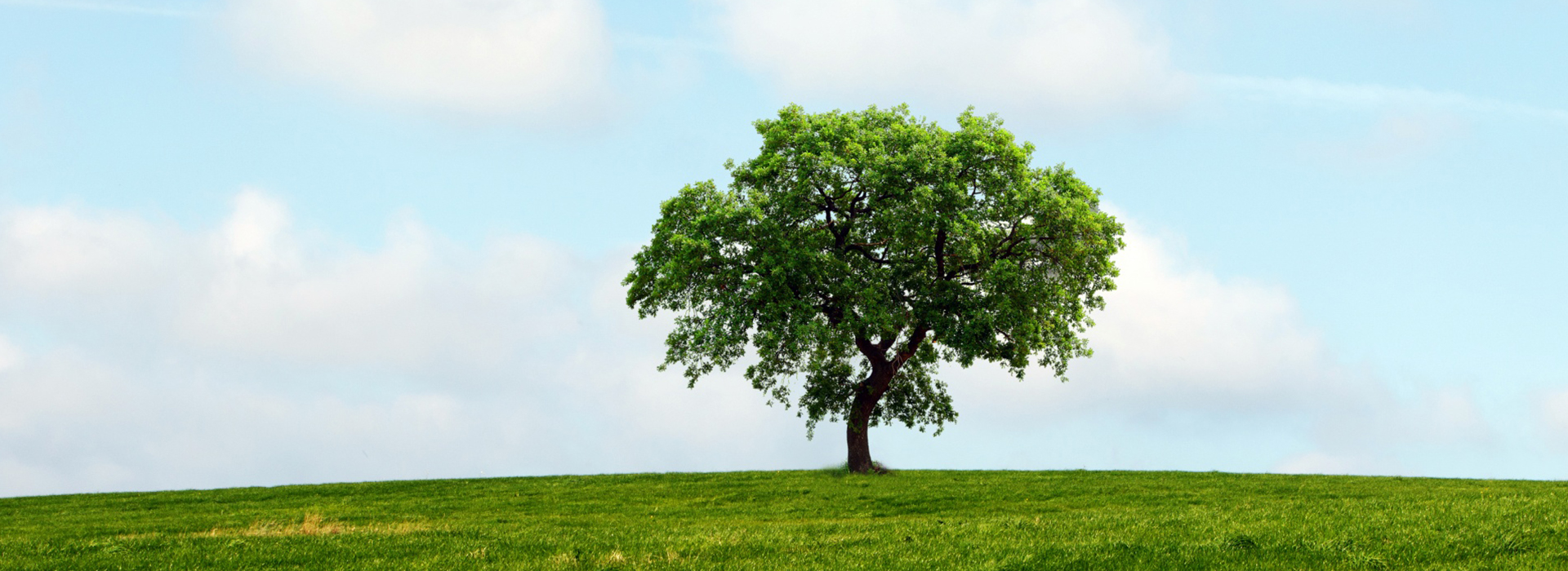 Plant a tree to offset your carbon footprint